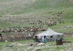 Wanderschäfer am Aragatz